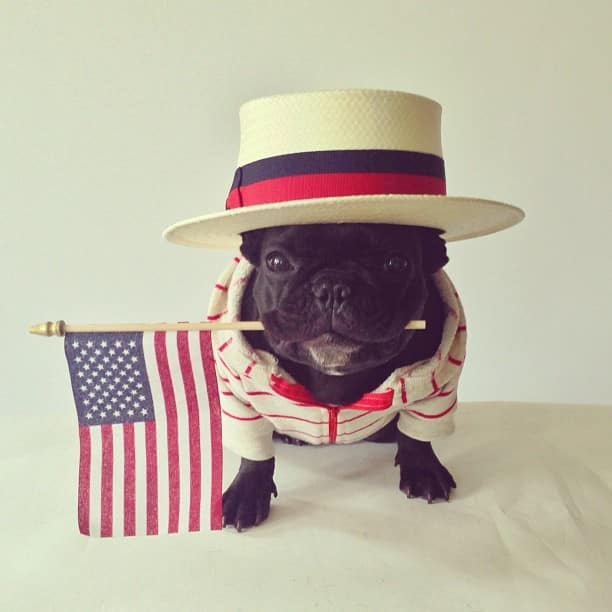 ▷ Trotter el bulldog frances mas gracioso de Instagram ? 30