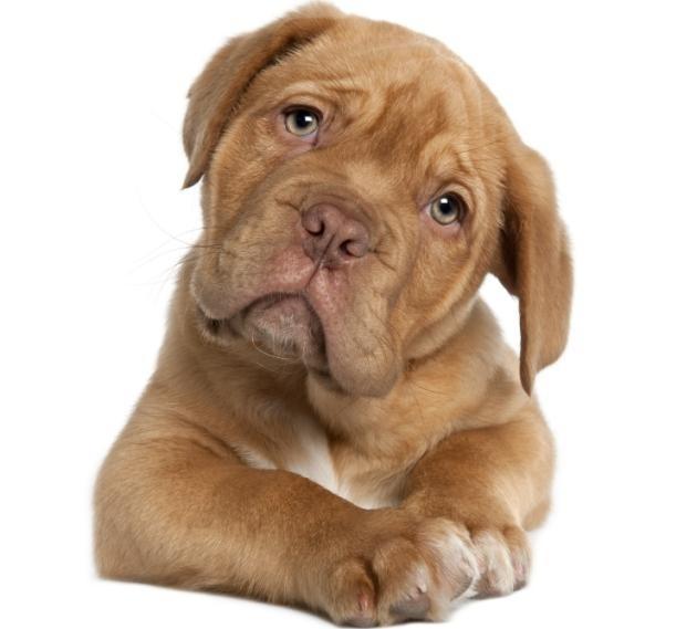 ¿Qué dicen los perros cuando ladran? 14