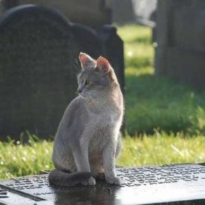 Un gato visita a diario la tumba de su amo y le lleva regalos 21