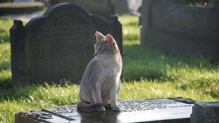 Un gato visita a diario la tumba de su amo y le lleva regalos 19