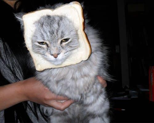 La moda de los Gatos Tostada 31