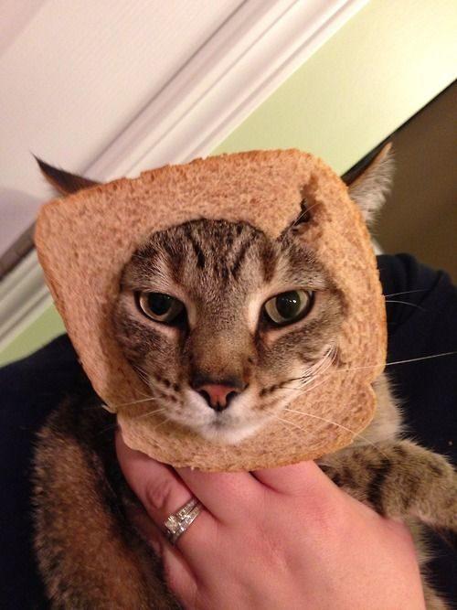 La moda de los Gatos Tostada 22