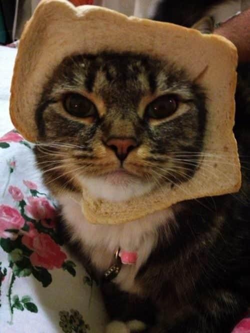 La moda de los Gatos Tostada 29