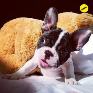 20 fotos de animales muy simpaticos 23