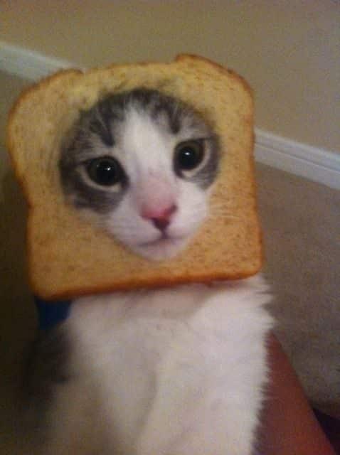 La moda de los Gatos Tostada 16