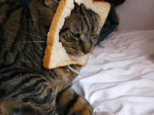 La moda de los Gatos Tostada 18