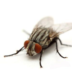 ¿Cuánto vive una mosca? 23