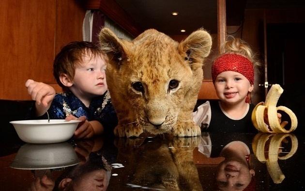 """807e35b865412538ef95e5cc2503f8c7 - En vez de un """"lindo gatito"""", la mascota de estos niños es un león cachorro"""