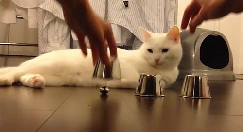 84d3398507efa84d1d5849d6753f444a - El gato más inteligente