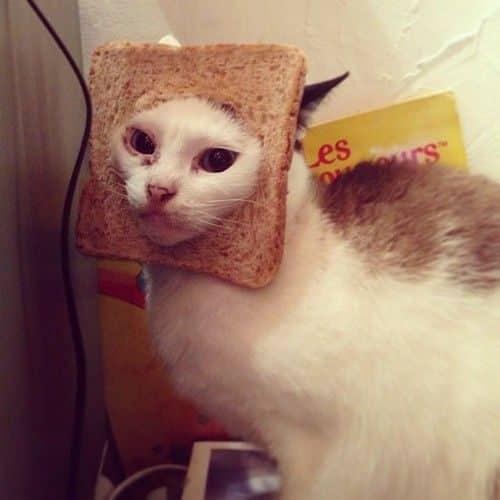 La moda de los Gatos Tostada 19