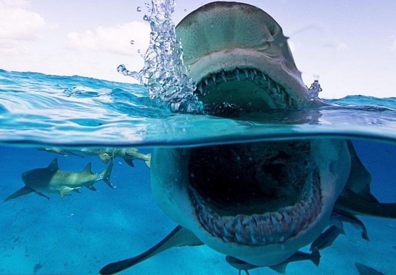 Primer plano de los tiburones más aterradores del océano 9