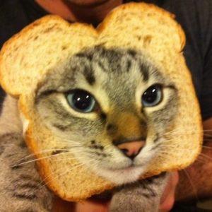 La moda de los Gatos Tostada 23