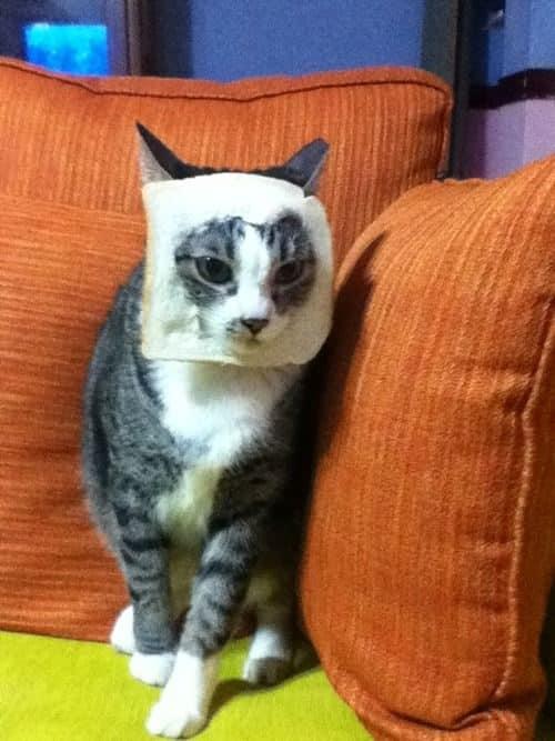 La moda de los Gatos Tostada 45