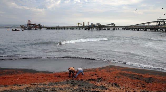 #Video Miles de camarones muertos aparecen en una playa chilena 17