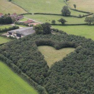 El último tributo a su amada esposa, plantar 6000 robles en forma de corazón 4