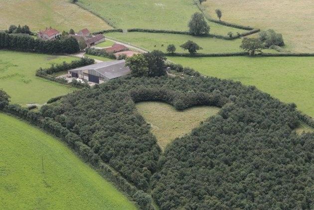 El último tributo a su amada esposa, plantar 6000 robles en forma de corazón 10