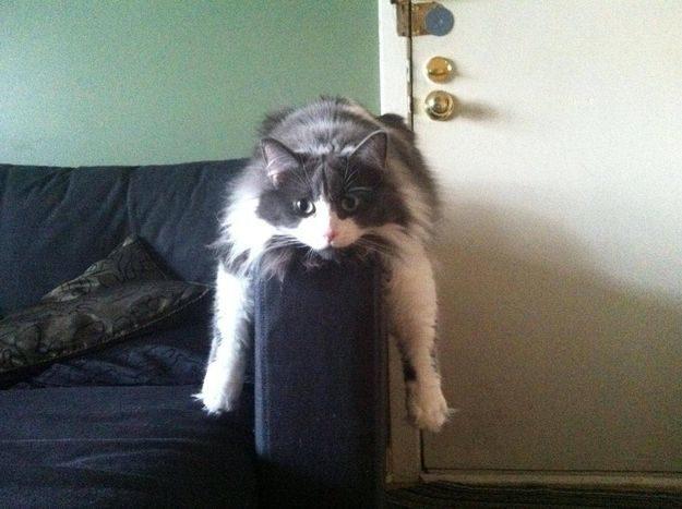 21 gatos que no están en huelga el complicado equilibrio de trabajo y vida 17