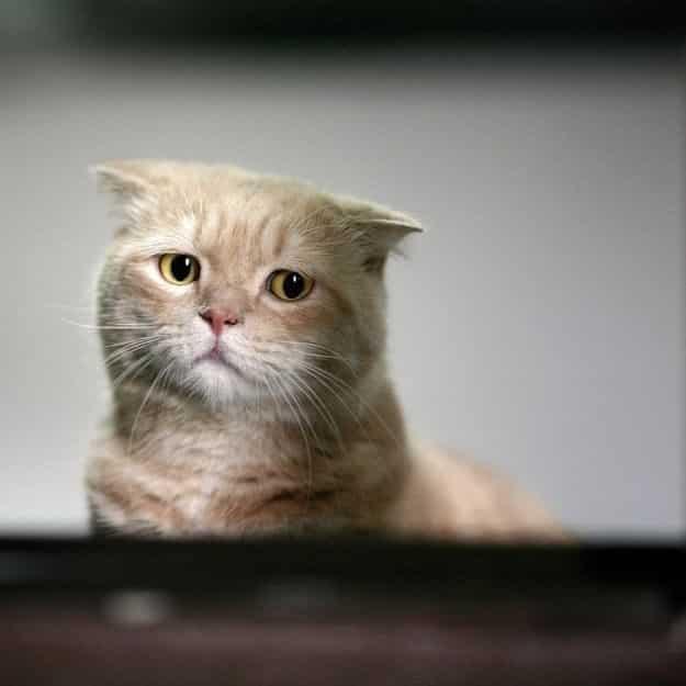 21 gatos que no están en huelga el complicado equilibrio de trabajo y vida 20