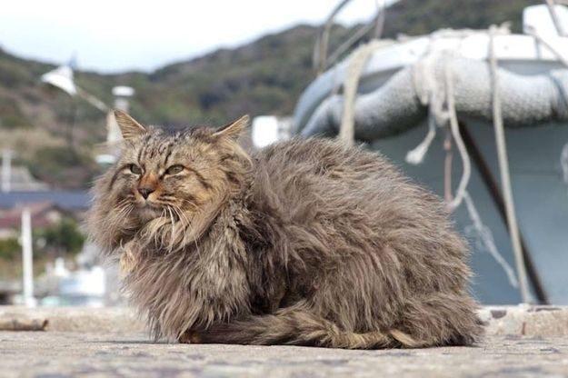 21 gatos que no están en huelga el complicado equilibrio de trabajo y vida 36