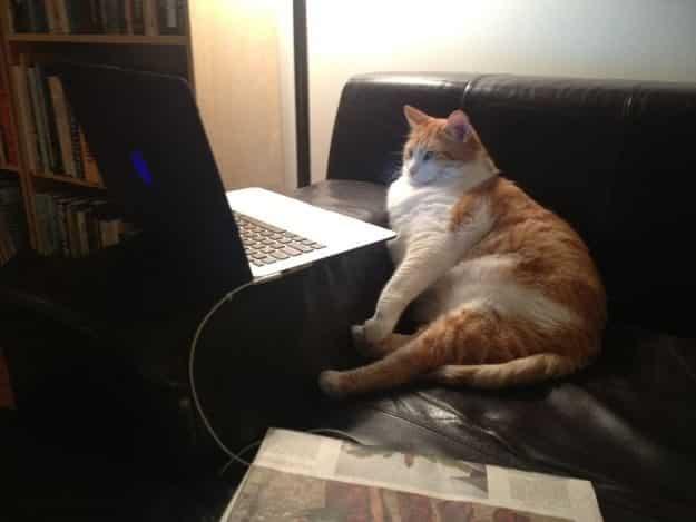 21 gatos que no están en huelga el complicado equilibrio de trabajo y vida 27