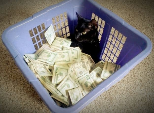 21 gatos que no están en huelga el complicado equilibrio de trabajo y vida 31