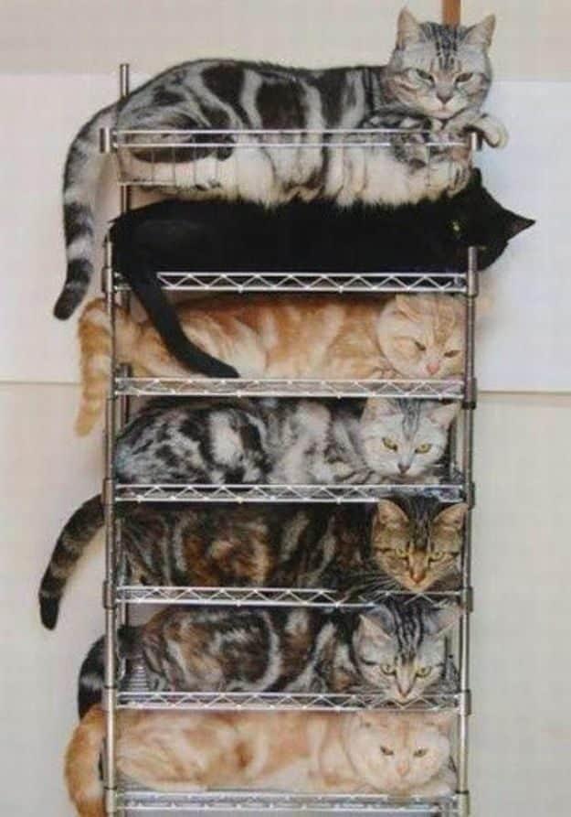 21 gatos que no están en huelga el complicado equilibrio de trabajo y vida 26