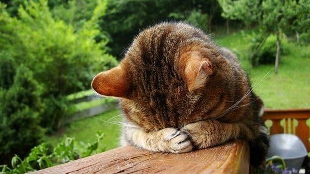 21 gatos que no están en huelga el complicado equilibrio de trabajo y vida 33