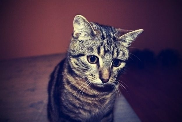 21 gatos que no están en huelga el complicado equilibrio de trabajo y vida 22