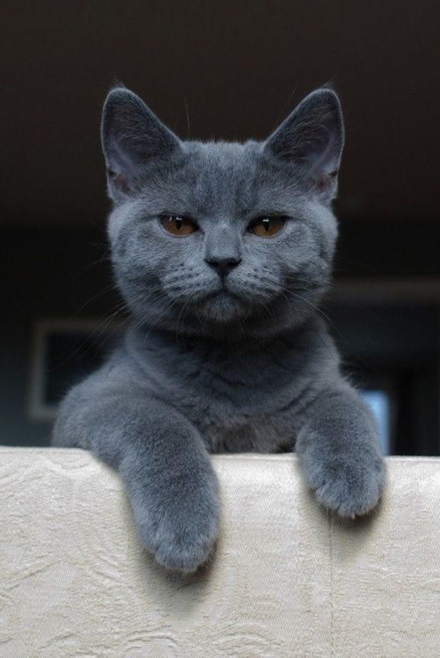 21 gatos que no están en huelga el complicado equilibrio de trabajo y vida 19
