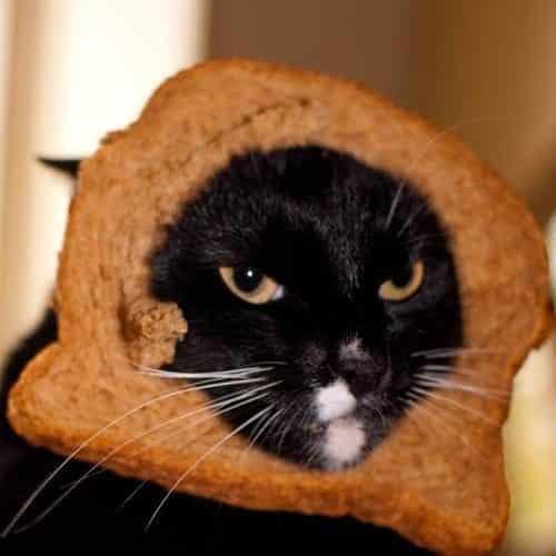 La moda de los Gatos Tostada 51
