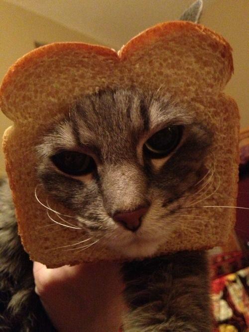 La moda de los Gatos Tostada 53