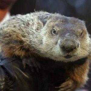 "Piden ""pena de muerte"" para marmota meteoróloga 19"