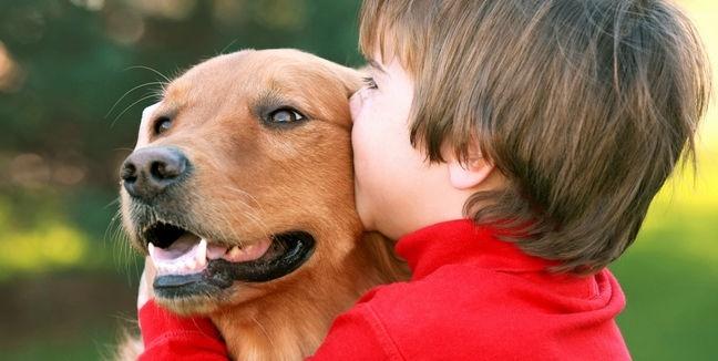 f84800a57d3e3a5f2516c71fdc657da9 - Perros niñeros: las 10 mejores razas para los niños