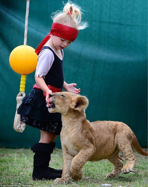 """En vez de un """"lindo gatito"""", la mascota de estos niños es un león cachorro 19"""
