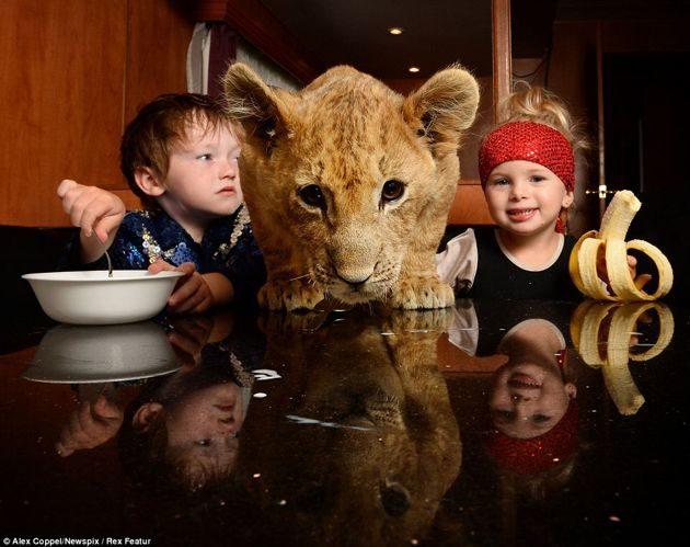 """En vez de un """"lindo gatito"""", la mascota de estos niños es un león cachorro 21"""