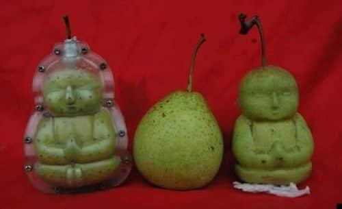 Hace crecer las peras con forma de Buda 16