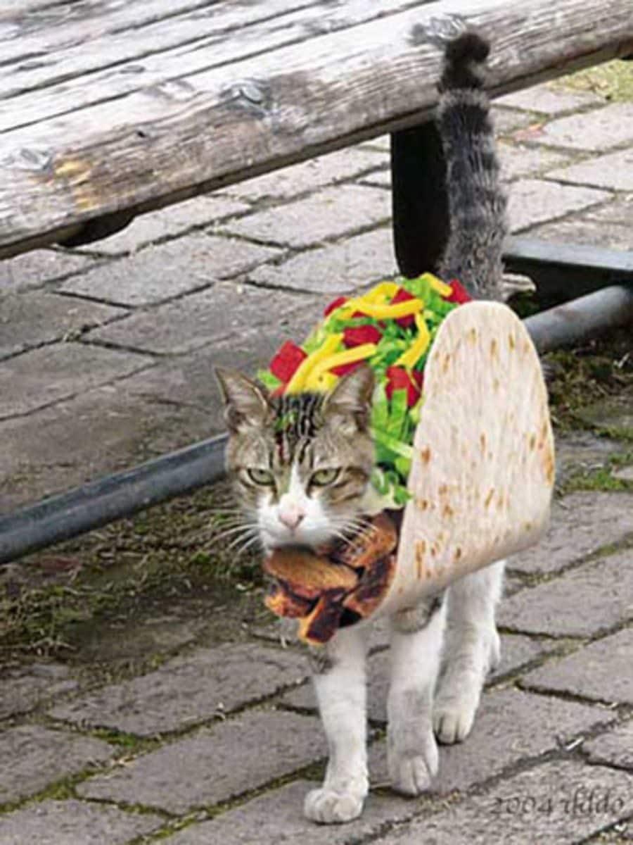 La moda de los Gatos Tostada 54