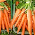 Crean combustible a partir de zanahorias 8