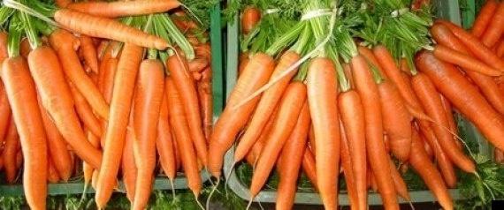 Crean combustible a partir de zanahorias 9