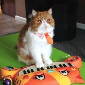 #Video 8 razones para querer al gato Pancake 19