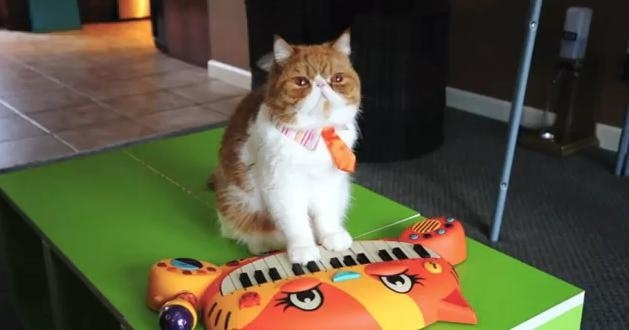 #Video 8 razones para querer al gato Pancake 14