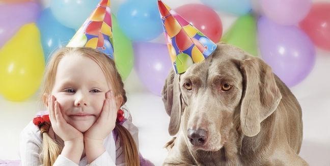 ¿Cómo calcular la edad de tu perro? 9