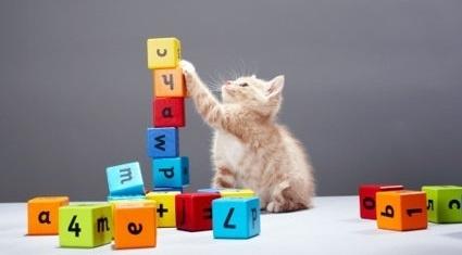 482264b9c0d42fb59f92b4fded62afb9 - Consejos para entrenar a tu gato