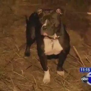 Un pit bull encuentra a una anciana enferma de Alzheimer y la salva de morir congelada 25