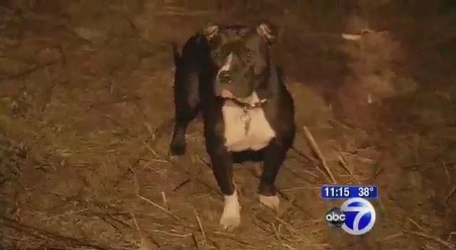Un pit bull encuentra a una anciana enferma de Alzheimer y la salva de morir congelada 2