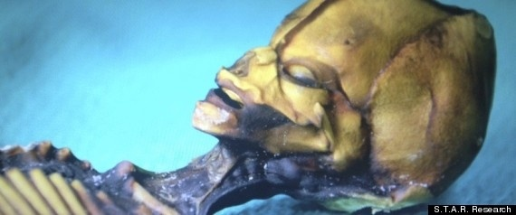 Documental revela en imágenes a alienígena descubierto en Chile (Fotos y Video) 10