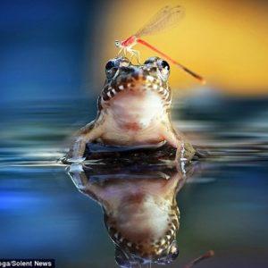 Mira la peculiar amistad de una rana y una libélula 27