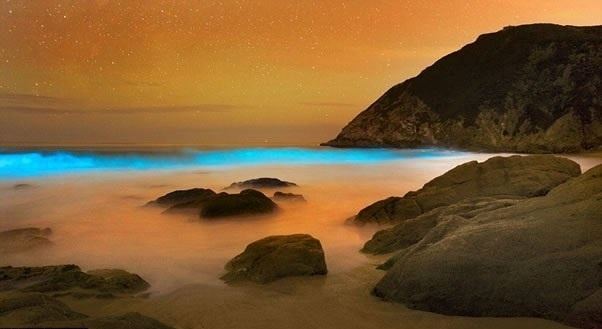 589a03d7f0bfaa87111cab768dc13309 - Hermosas olas azules brillantes que parecen de otro planeta (Fotos)