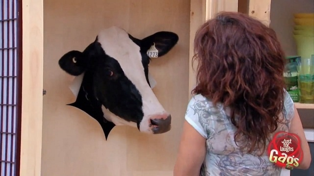 #Video Una vaca en el armario 11
