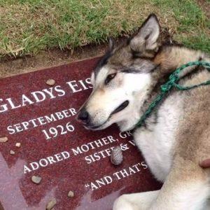 #Video Un perro llora la muerte de su familiar en su tumba 23